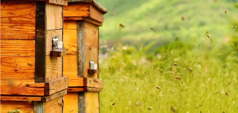 Пчеловоды и практики.